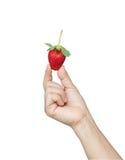 φρέσκια φράουλα χεριών Στοκ εικόνα με δικαίωμα ελεύθερης χρήσης