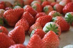 Φρέσκια φράουλα από το οργανικό αγρόκτημα Στοκ Εικόνα