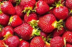 Φρέσκια φράουλα σε ένα άσπρο κύπελλο στο άσπρο υπόβαθρο φ Στοκ Εικόνες