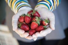 φρέσκια φράουλα χεριών Στοκ Φωτογραφίες