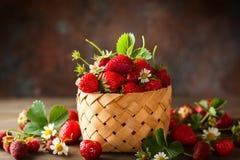 φρέσκια φράουλα στοκ φωτογραφία