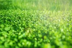 φρέσκια χλόη πεδίων Πράσινη σύσταση χλόης - αφηρημένο backgro άνοιξη Στοκ Φωτογραφίες