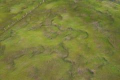 φρέσκια χλόη πράσινη Στοκ εικόνα με δικαίωμα ελεύθερης χρήσης