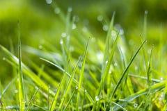 φρέσκια χλόη πράσινη Στοκ Εικόνα