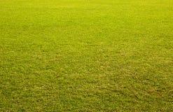 φρέσκια χλόη Στοκ φωτογραφία με δικαίωμα ελεύθερης χρήσης