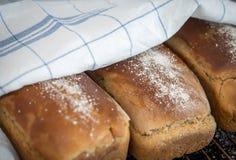 Φρέσκια ψημένη φραντζόλα ψωμιού σίκαλης κάτω από την πετσέτα τσαγιού Στοκ εικόνα με δικαίωμα ελεύθερης χρήσης