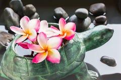 Φρέσκια όμορφη γλυκιά ρόδινη plumeria λουλουδιών ή δέσμη ι frangipani Στοκ Εικόνα