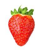 Φρέσκια ώριμη φράουλα, που απομονώνεται Στοκ φωτογραφία με δικαίωμα ελεύθερης χρήσης