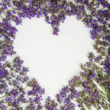Φρέσκια lavender καρδιά που απομονώνεται στο άσπρο υπόβαθρο Στοκ Εικόνες