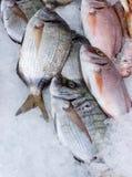 Φρέσκια seabream σύλληψη στον κρύο πάγο 2 στοκ φωτογραφία με δικαίωμα ελεύθερης χρήσης