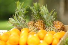 φρέσκοι ανανάδες στοκ φωτογραφίες