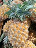 φρέσκοι ανανάδες Στοκ φωτογραφία με δικαίωμα ελεύθερης χρήσης