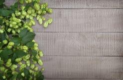 Φρέσκοι ευώδεις κώνοι των λυκίσκων στους ξύλινους πίνακες Ένα υπόβαθρο στο ρ Στοκ Εικόνες