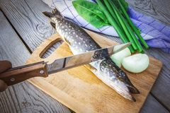 Φρέσκοι λούτσοι με τα κρεμμύδια και πράσινα στον τέμνοντα πίνακα Ψάρια που προετοιμάζονται ακατέργαστα για το μαγείρεμα στοκ εικόνες