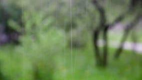 Φρέσκοι πράσινοι θάμνοι κάτω από τη βροχή άνοιξη απόθεμα βίντεο