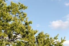 Φρέσκοι πράσινοι φύλλα και μπλε ουρανός Στοκ φωτογραφία με δικαίωμα ελεύθερης χρήσης