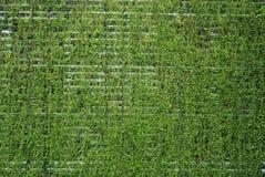 φρέσκοι τοίχοι SPA φυτών ανα&sigma Στοκ Φωτογραφία