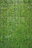 φρέσκοι τοίχοι SPA φυτών ανα&sigma Στοκ Φωτογραφίες
