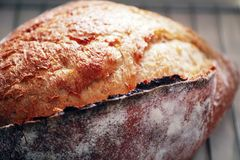 φρέσκος αγροτικός ψωμιο Στοκ Εικόνες