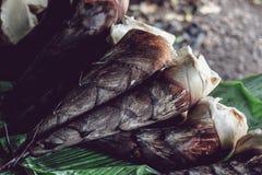 Φρέσκος ακατέργαστος βλαστός μπαμπού ή νεαρός βλαστός μπαμπού Στοκ εικόνες με δικαίωμα ελεύθερης χρήσης