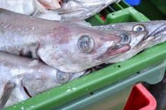 φρέσκος ακατέργαστος ψαριών Στοκ εικόνες με δικαίωμα ελεύθερης χρήσης