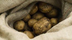 Φρέσκος από τις επίγειες πατάτες σε έναν σάκο απόθεμα βίντεο