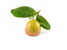 Φρέσκος αυξήθηκε μήλο Στοκ εικόνα με δικαίωμα ελεύθερης χρήσης