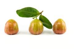 Φρέσκος αυξήθηκε μήλο Στοκ φωτογραφίες με δικαίωμα ελεύθερης χρήσης