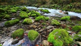 Φρέσκος καθαρός ποταμός από τα βουνά το φθινόπωρο φιλμ μικρού μήκους