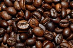 φρέσκος καφέ φασολιών ανα Στοκ φωτογραφία με δικαίωμα ελεύθερης χρήσης