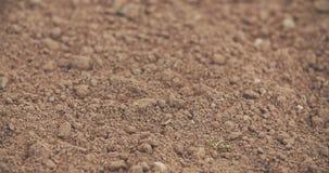 Φρέσκος καλλιεργημένος τομέας φιλμ μικρού μήκους