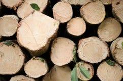 Φρέσκος ξύλινος φυσικός που πριονίζεται μια κινηματογράφηση σε πρώτο πλάνο κούτσουρων στοκ φωτογραφία