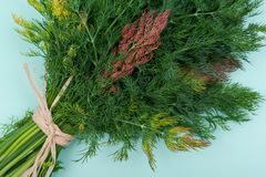 Φρέσκος οργανικός άνηθος που δένεται με ένα άχυρο που απομονώνεται σε πράσινο στοκ εικόνα