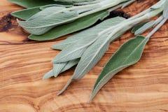 Φρέσκος οργανικός κήπος ή κοινά λογικά φύλλα officinalis Salvia στο φυσικό ξύλο Οικογένεια μεντών Lamiaceae στοκ εικόνες