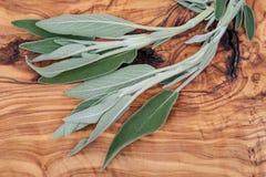Φρέσκος οργανικός κήπος ή κοινά λογικά φύλλα officinalis Salvia στο φυσικό ξύλο Οικογένεια μεντών Lamiaceae στοκ φωτογραφία με δικαίωμα ελεύθερης χρήσης