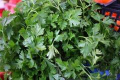 φρέσκος οργανικός μαϊντανός Σύσταση υποβάθρου μαϊντανού Σχέδιο λαχανικών Πράσινη ταπετσαρία άνηθου στοκ εικόνες με δικαίωμα ελεύθερης χρήσης