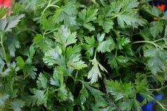 Φρέσκος οργανικός μαϊντανός Σύσταση υποβάθρου μαϊντανού Σχέδιο λαχανικών Πράσινη ταπετσαρία άνηθου στοκ εικόνες