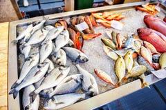 φρέσκος πάγος ψαριών Αγορά ψαριών στο νησί της Μαδέρας Στοκ φωτογραφία με δικαίωμα ελεύθερης χρήσης
