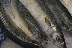 φρέσκος πάγος ψαριών Ψάρια θάλασσας Στοκ εικόνα με δικαίωμα ελεύθερης χρήσης