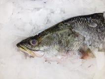 φρέσκος πάγος ψαριών Στοκ εικόνα με δικαίωμα ελεύθερης χρήσης