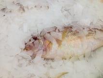 φρέσκος πάγος ψαριών Στοκ Φωτογραφία