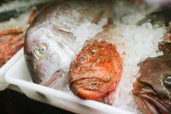 φρέσκος πάγος ψαριών Στοκ φωτογραφίες με δικαίωμα ελεύθερης χρήσης