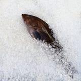 φρέσκος πάγος ψαριών Στοκ φωτογραφία με δικαίωμα ελεύθερης χρήσης