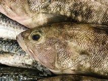 φρέσκος πάγος ψαριών Στοκ Εικόνες