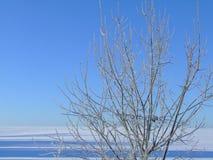 φρέσκος πάγος Στοκ Φωτογραφία