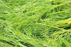 φρέσκος πράσινος άνηθου ακατέργαστο χορτάρι στοκ φωτογραφία