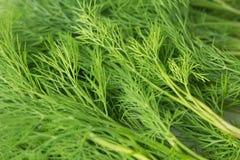 φρέσκος πράσινος άνηθου υπόβαθρο του χορταριού στοκ εικόνες