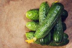 Φρέσκος πράσινος αγγουριών αγγουριών Στοκ Εικόνα