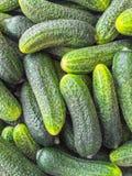 φρέσκος πράσινος επάνω αγγουριών ανασκόπησης στενός Στοκ φωτογραφία με δικαίωμα ελεύθερης χρήσης