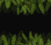 Φρέσκος πράσινος στενός επάνω κλάδων έλατου στο μαύρο υπόβαθρο Στοκ Εικόνες